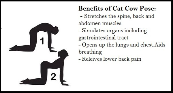 cat-cow-pose-good-for-spine-600x323