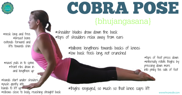 cobra-pose-tips
